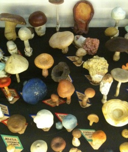 Papier mache fungi, Museum of Economic Botany