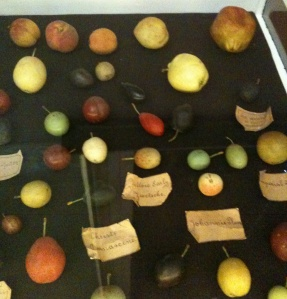 Papier mache plums, and one wax pomegranate, Museum of Economic Botany