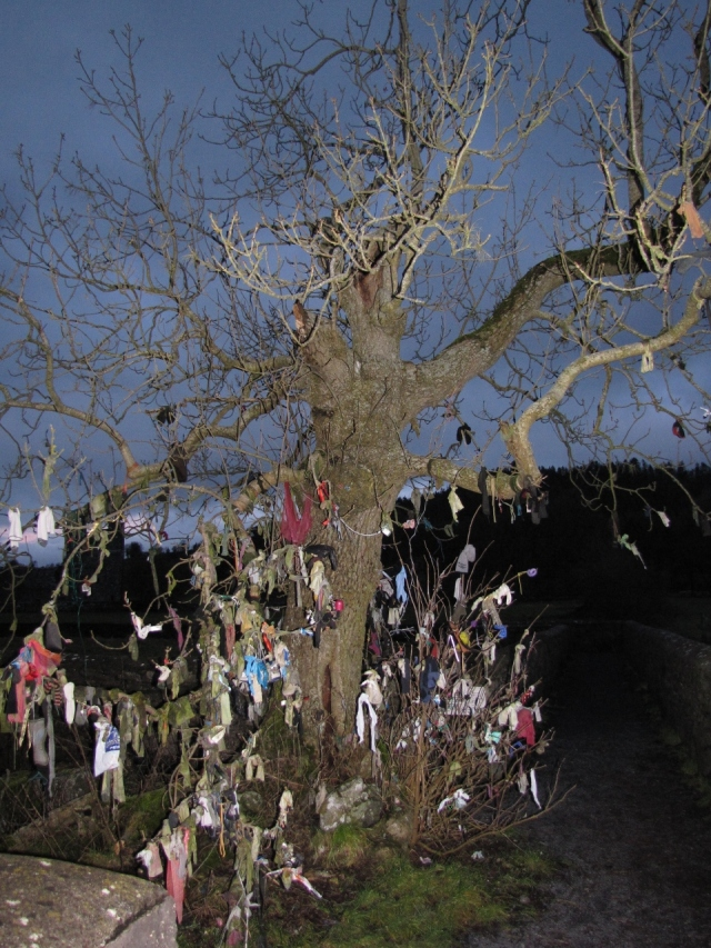 Raggy ash tree, Fore, Co. Westmeath