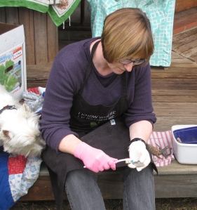 Cleaning artefacts accompanied by a curious dog