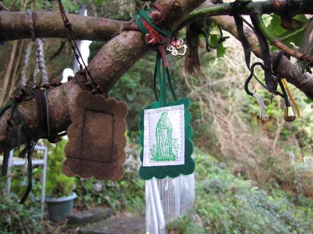 Holly tree at the holy well, Carraroe, Sligo