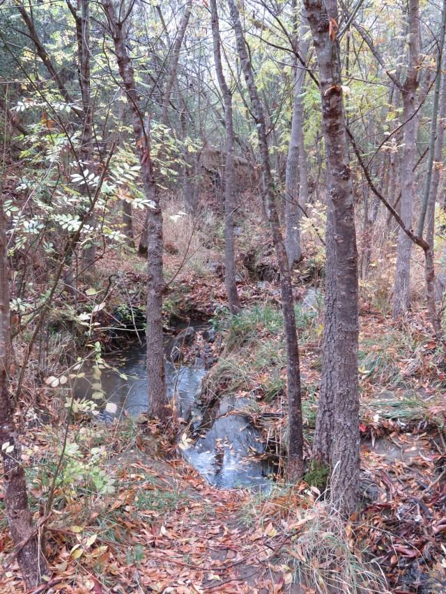 Magpie Creek