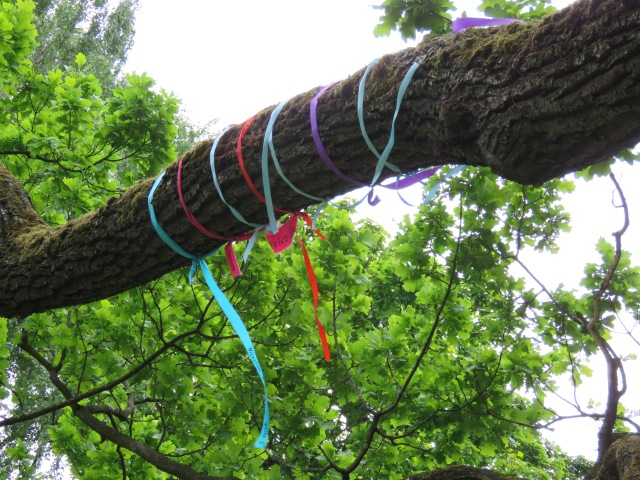 Tree decorated with ribbons, Riga, June 2015